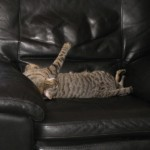 Cat lounging in a leather recliner
